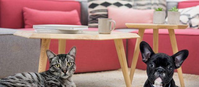 9 dicas de decoração para adaptar a casa à chegada dos pets