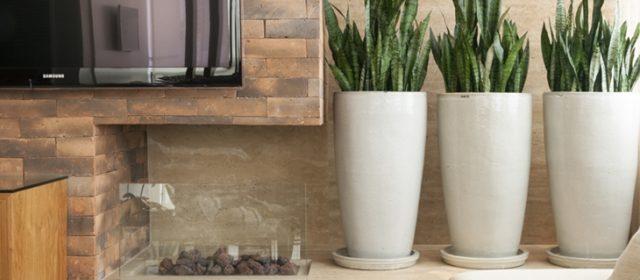 Espada-de-são-jorge: flexibilidade faz da planta queridinha da decoração