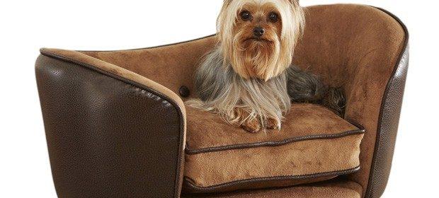 Sofá para cachorro: estofado pode ser um charme na decoração